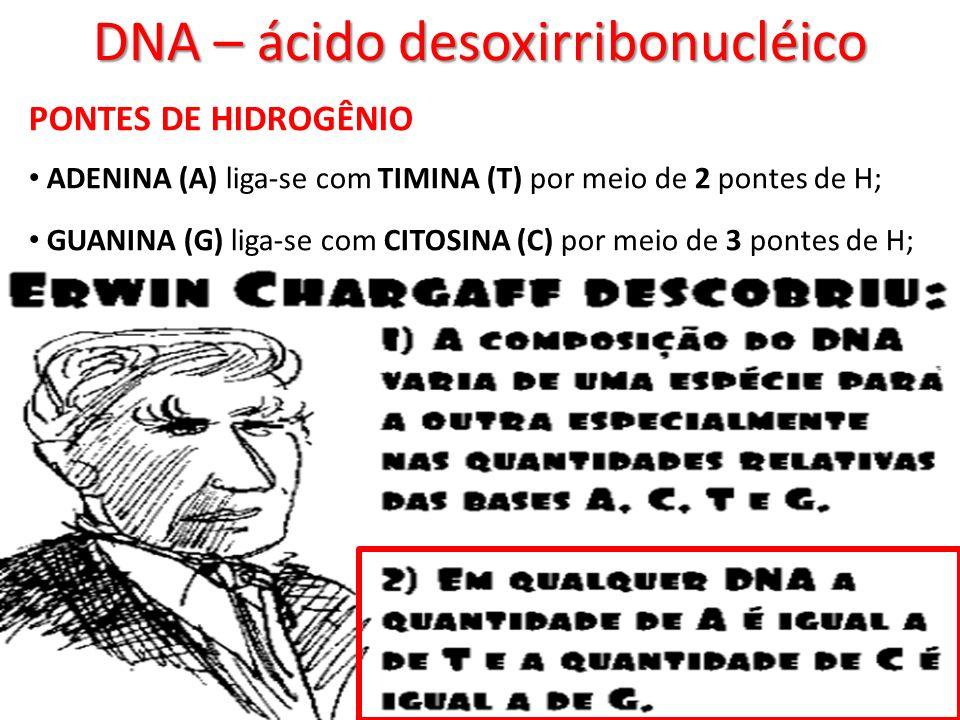 DNA – ácido desoxirribonucléico PONTES DE HIDROGÊNIO ADENINA (A) liga-se com TIMINA (T) por meio de 2 pontes de H; GUANINA (G) liga-se com CITOSINA (C