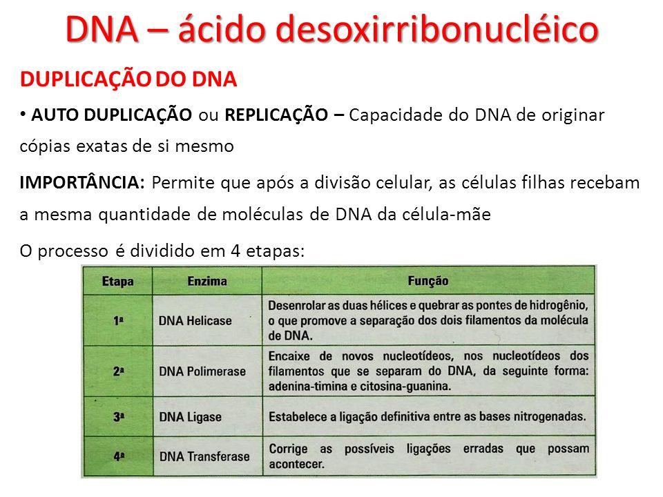 DUPLICAÇÃO DO DNA AUTO DUPLICAÇÃO ou REPLICAÇÃO – Capacidade do DNA de originar cópias exatas de si mesmo IMPORTÂNCIA: Permite que após a divisão celu