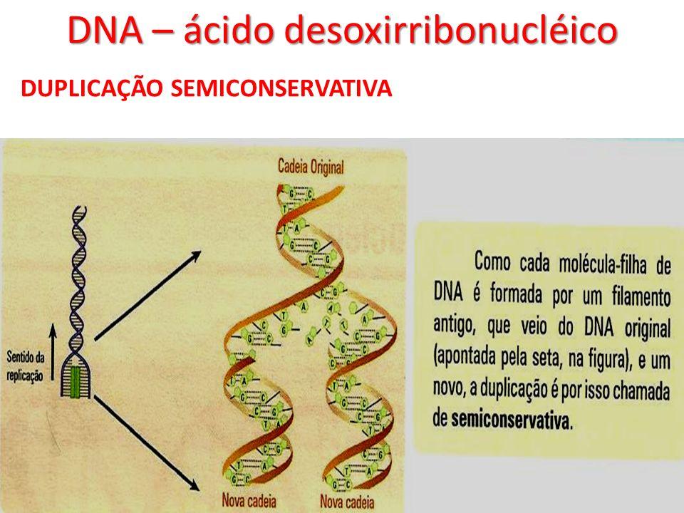 DNA – ácido desoxirribonucléico DUPLICAÇÃO SEMICONSERVATIVA