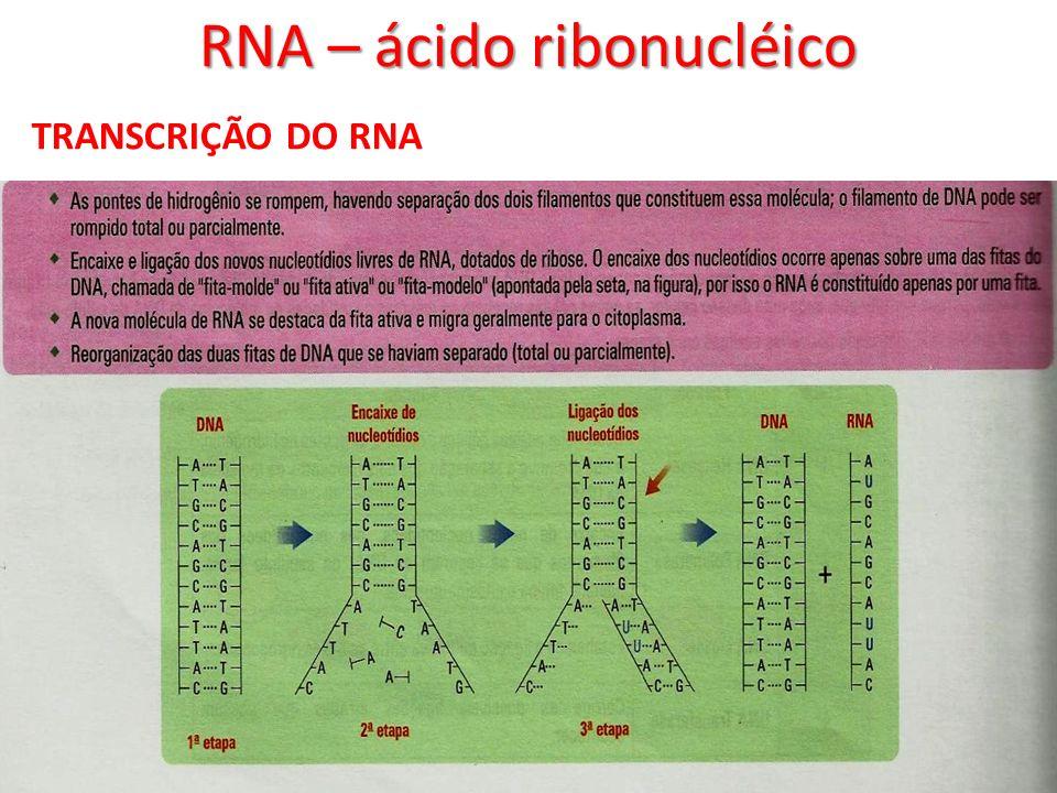 RNA – ácido ribonucléico TRANSCRIÇÃO DO RNA