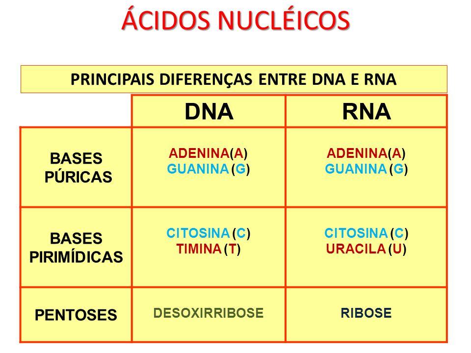 PRINCIPAIS DIFERENÇAS ENTRE DNA E RNA DNARNA BASES PÚRICAS ADENINA(A) GUANINA (G) ADENINA(A) GUANINA (G) BASES PIRIMÍDICAS CITOSINA (C) TIMINA (T) CIT