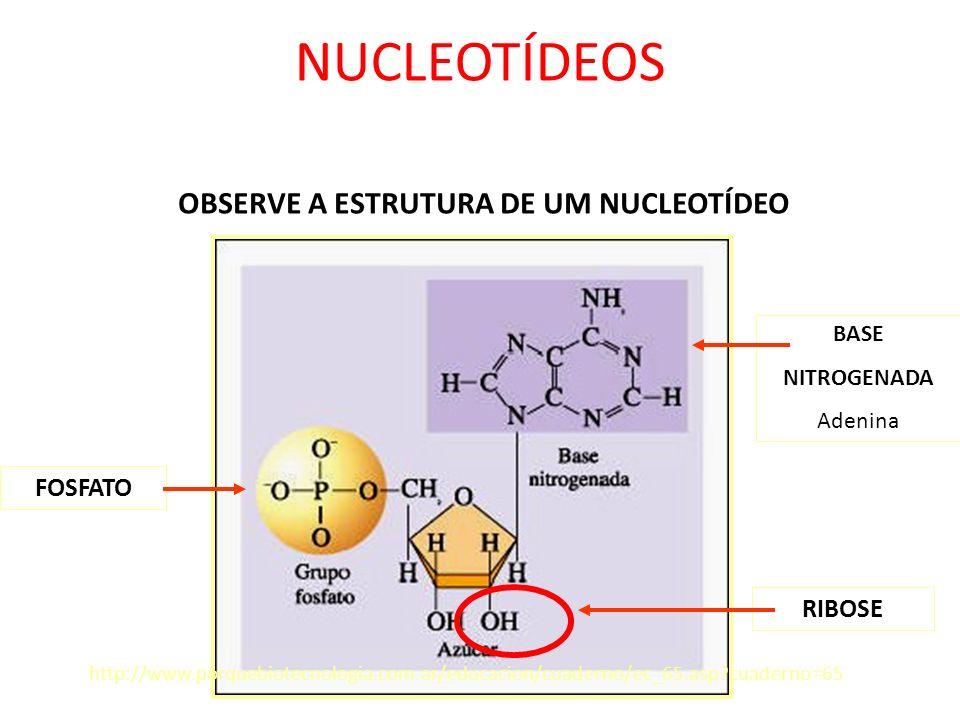 BASE NITROGENADA Adenina RIBOSE http://www.porquebiotecnologia.com.ar/educacion/cuaderno/ec_65.asp?cuaderno=65 OBSERVE A ESTRUTURA DE UM NUCLEOTÍDEO F