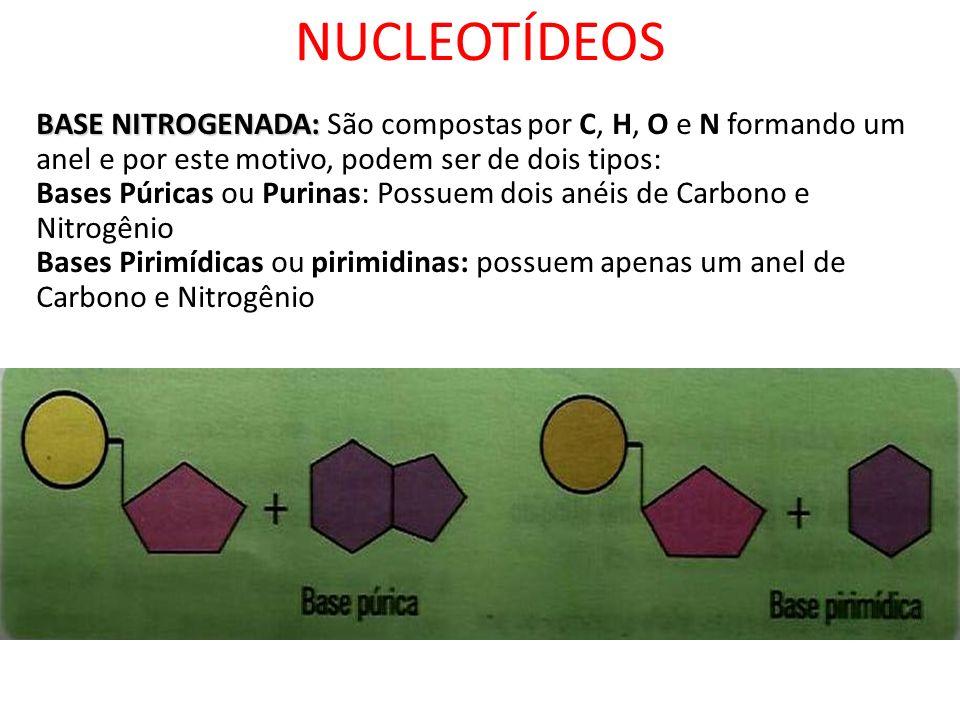 NUCLEOTÍDEOS BASE NITROGENADA: BASE NITROGENADA: São compostas por C, H, O e N formando um anel e por este motivo, podem ser de dois tipos: Bases Púri