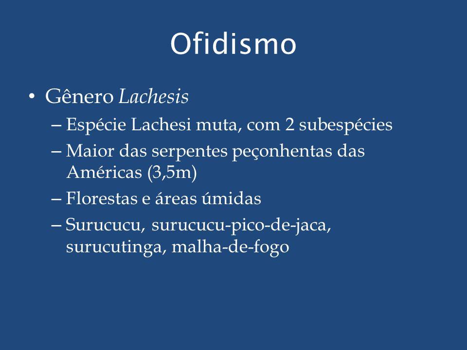 Ofidismo Gênero Lachesis – Espécie Lachesi muta, com 2 subespécies – Maior das serpentes peçonhentas das Américas (3,5m) – Florestas e áreas úmidas –