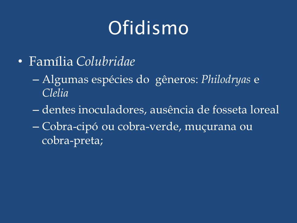 Ofidismo Família Colubridae – Algumas espécies do gêneros: Philodryas e Clelia – dentes inoculadores, ausência de fosseta loreal – Cobra-cipó ou cobra