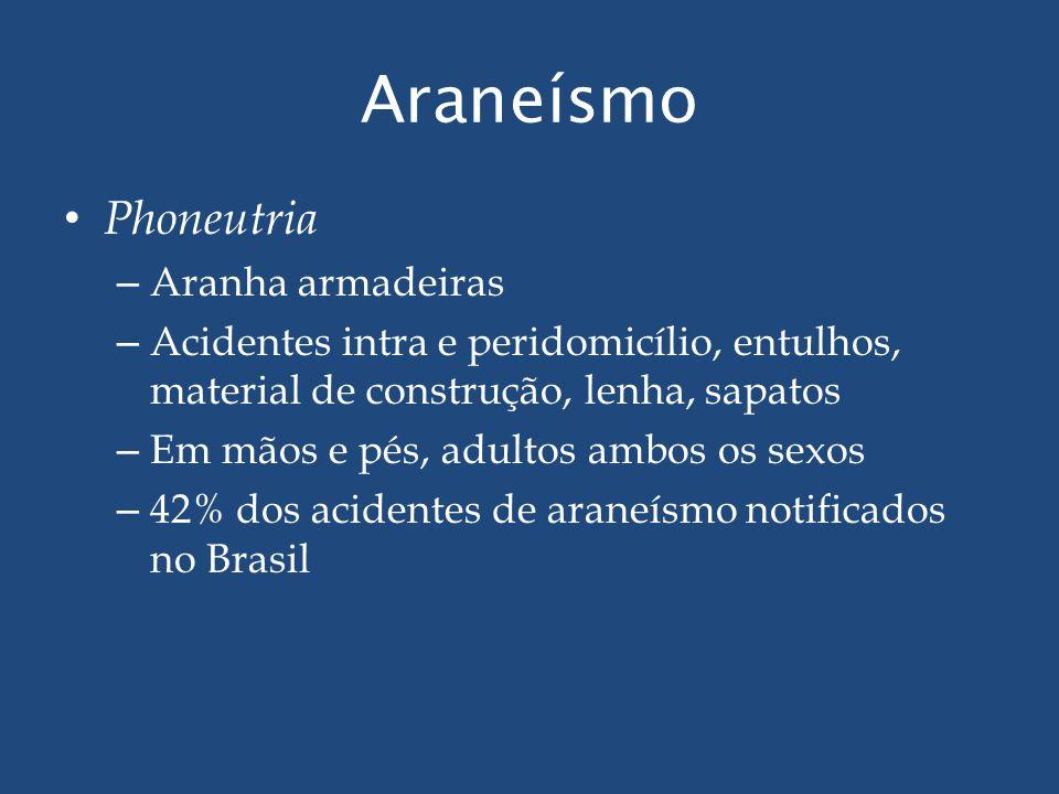 Araneísmo Phoneutria – Aranha armadeiras – Acidentes intra e peridomicílio, entulhos, material de construção, lenha, sapatos – Em mãos e pés, adultos