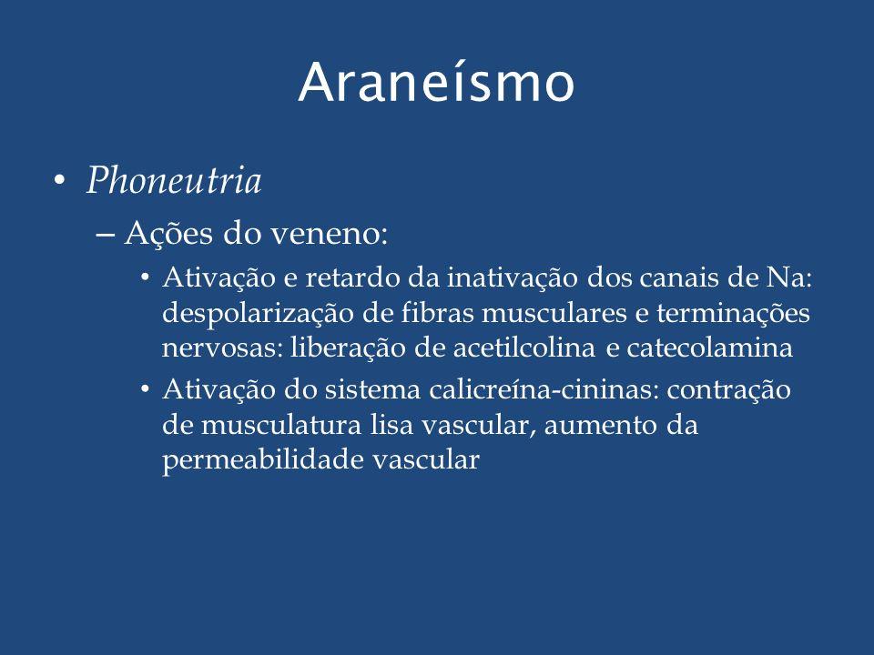Araneísmo Phoneutria – Ações do veneno: Ativação e retardo da inativação dos canais de Na: despolarização de fibras musculares e terminações nervosas: