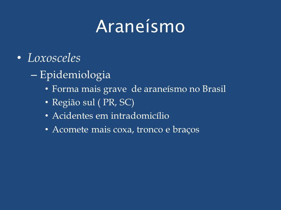 Araneísmo Loxosceles – Epidemiologia Forma mais grave de araneísmo no Brasil Região sul ( PR, SC) Acidentes em intradomicílio Acomete mais coxa, tronc