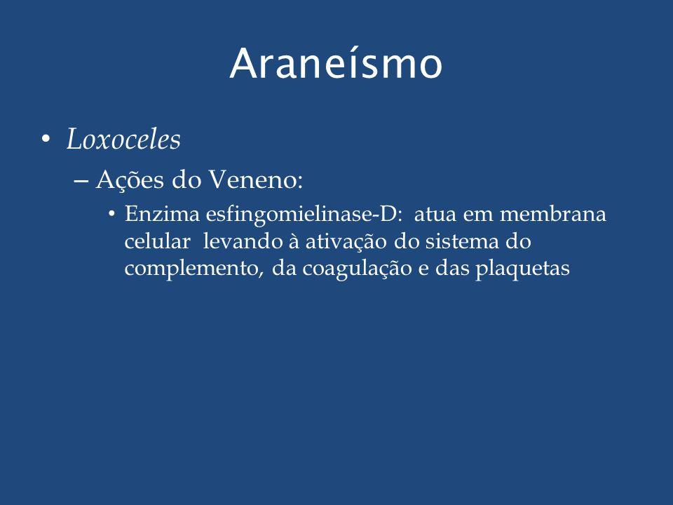 Araneísmo Loxoceles – Ações do Veneno: Enzima esfingomielinase-D: atua em membrana celular levando à ativação do sistema do complemento, da coagulação