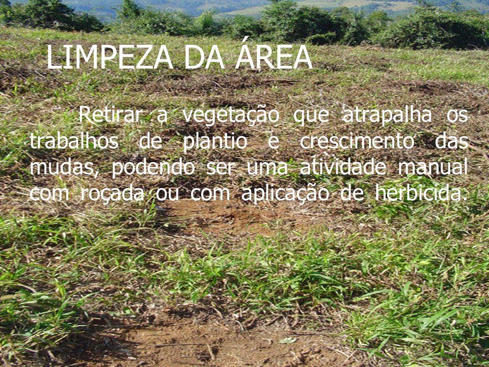 LIMPEZA DA ÁREA Retirar a vegetação que atrapalha os trabalhos de plantio e crescimento das mudas, podendo ser uma atividade manual com roçada ou com aplicação de herbicida.