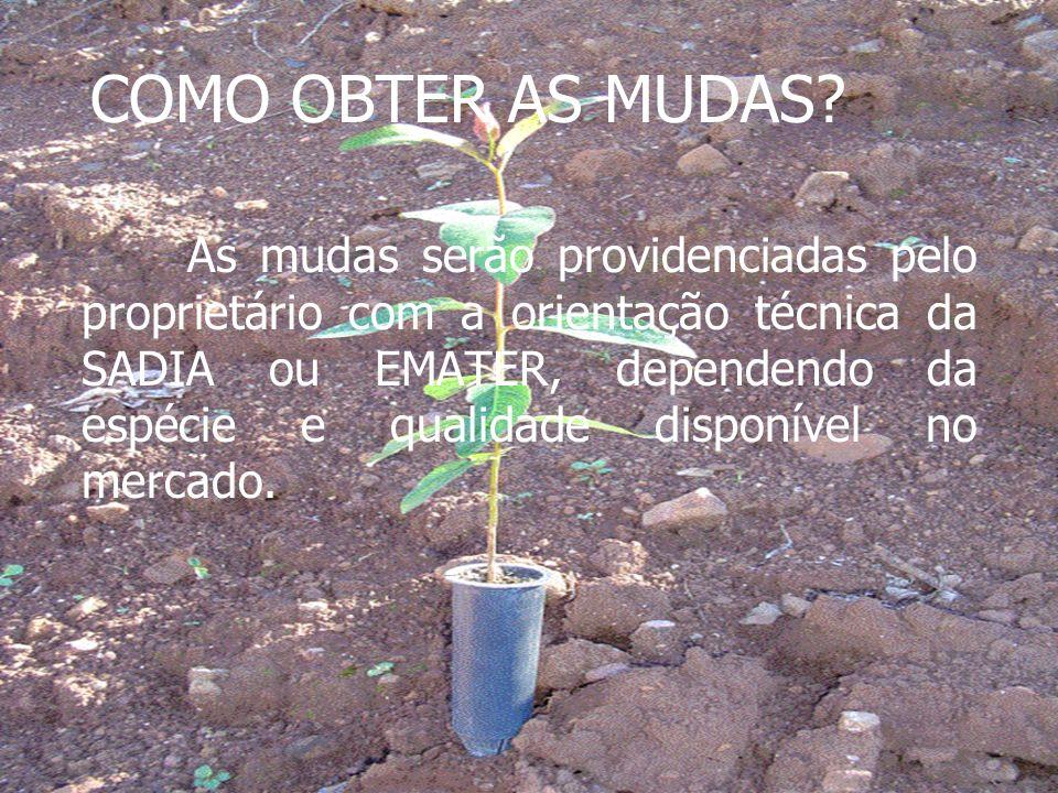 COMO OBTER AS MUDAS? As mudas serão providenciadas pelo proprietário com a orientação técnica da SADIA ou EMATER, dependendo da espécie e qualidade di