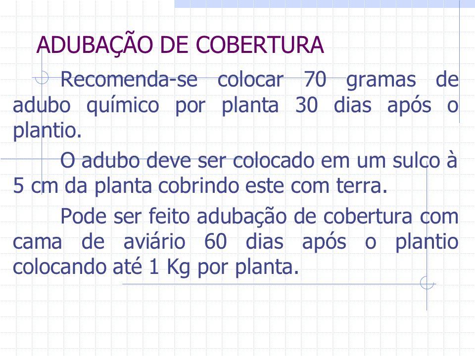 ADUBAÇÃO DE COBERTURA Recomenda-se colocar 70 gramas de adubo químico por planta 30 dias após o plantio. O adubo deve ser colocado em um sulco à 5 cm