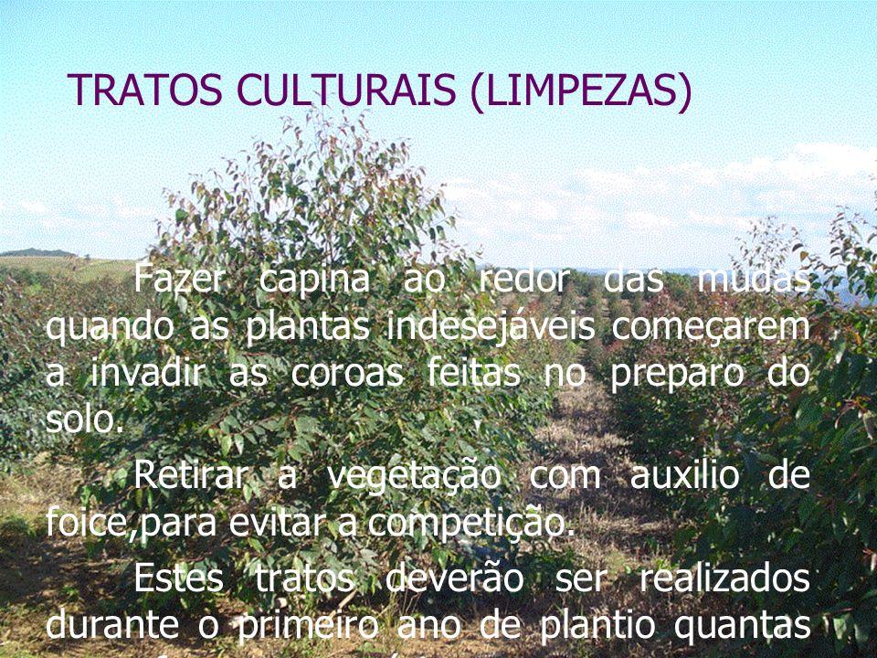 TRATOS CULTURAIS (LIMPEZAS) Fazer capina ao redor das mudas quando as plantas indesejáveis começarem a invadir as coroas feitas no preparo do solo.