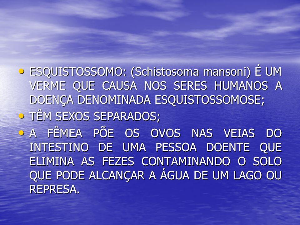 ESQUISTOSSOMO: (Schistosoma mansoni) É UM VERME QUE CAUSA NOS SERES HUMANOS A DOENÇA DENOMINADA ESQUISTOSSOMOSE; ESQUISTOSSOMO: (Schistosoma mansoni)