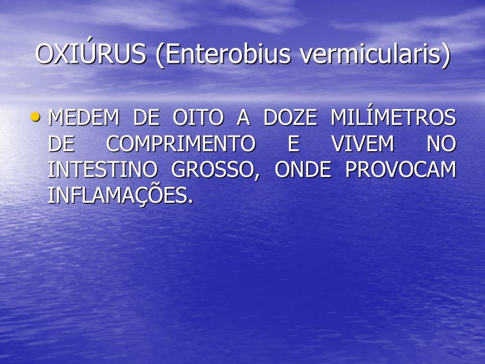 OXIÚRUS (Enterobius vermicularis) MEDEM DE OITO A DOZE MILÍMETROS DE COMPRIMENTO E VIVEM NO INTESTINO GROSSO, ONDE PROVOCAM INFLAMAÇÕES. MEDEM DE OITO