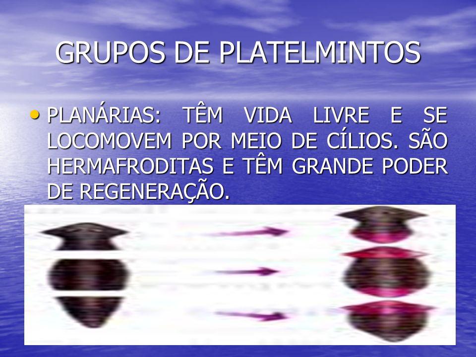GRUPOS DE PLATELMINTOS PLANÁRIAS: TÊM VIDA LIVRE E SE LOCOMOVEM POR MEIO DE CÍLIOS. SÃO HERMAFRODITAS E TÊM GRANDE PODER DE REGENERAÇÃO. PLANÁRIAS: TÊ