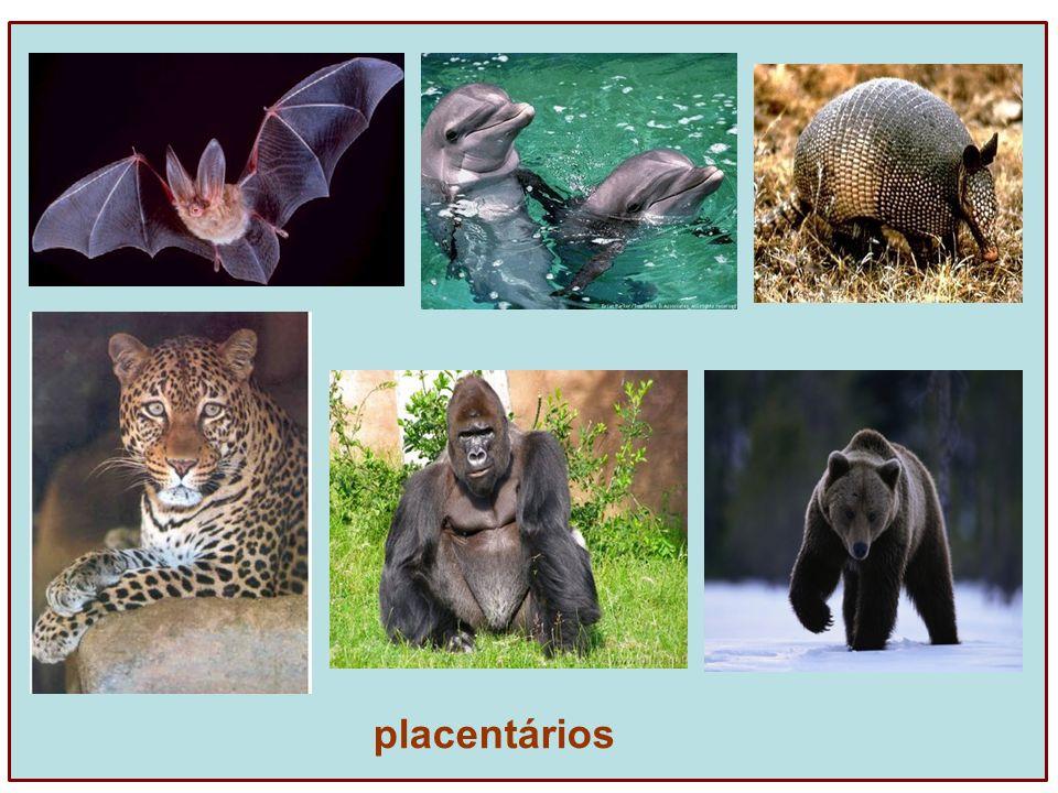 placentários