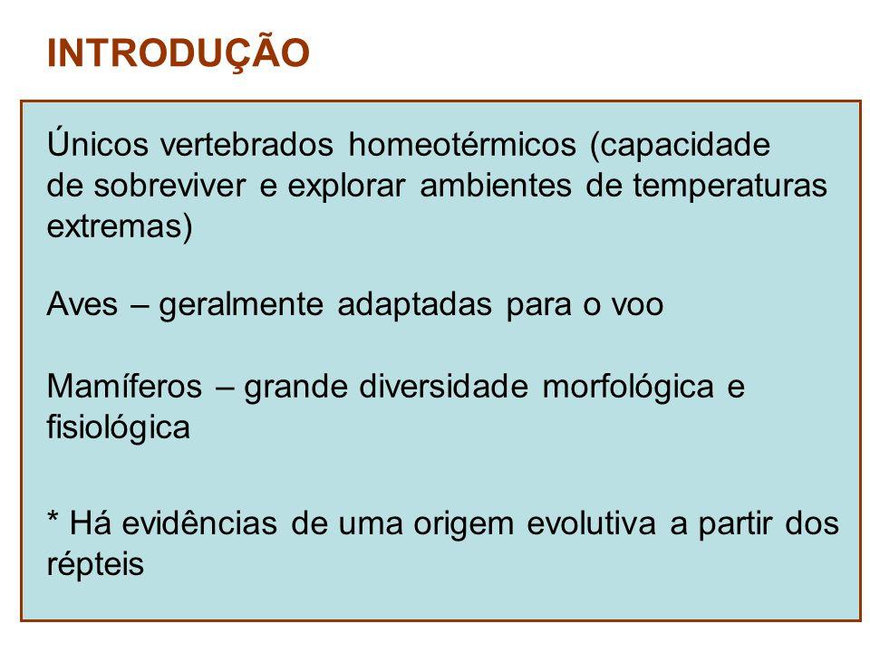 Únicos vertebrados homeotérmicos (capacidade de sobreviver e explorar ambientes de temperaturas extremas) * Há evidências de uma origem evolutiva a pa