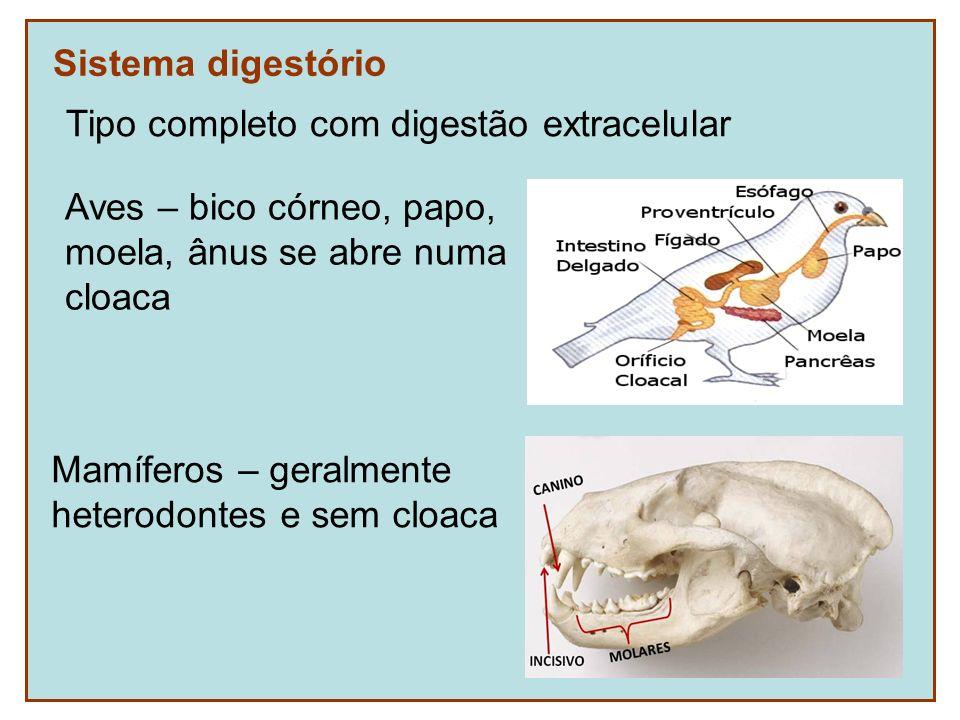 Sistema digestório Mamíferos – geralmente heterodontes e sem cloaca Tipo completo com digestão extracelular Aves – bico córneo, papo, moela, ânus se a