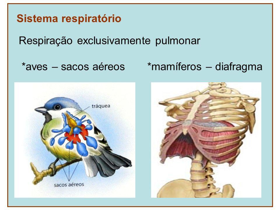 Sistema respiratório Respiração exclusivamente pulmonar *mamíferos – diafragma*aves – sacos aéreos