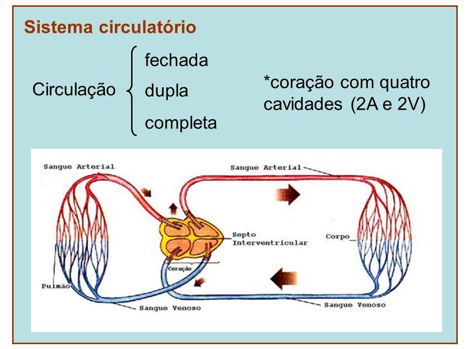 Sistema circulatório Circulação fechada dupla completa *coração com quatro cavidades (2A e 2V)