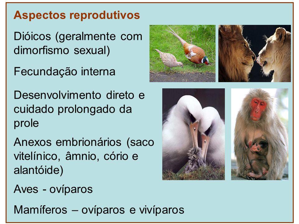Aspectos reprodutivos Fecundação interna Anexos embrionários (saco vitelínico, âmnio, cório e alantóide) Aves - ovíparos Mamíferos – ovíparos e vivípa