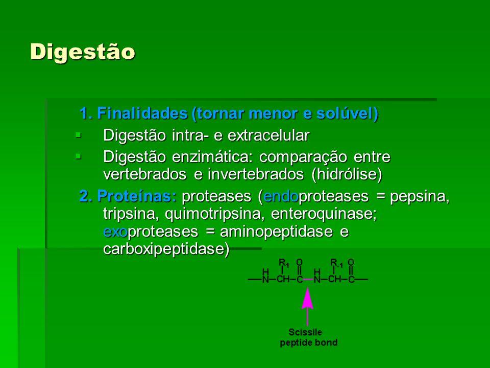Digestão 1. Finalidades (tornar menor e solúvel) 1. Finalidades (tornar menor e solúvel) Digestão intra- e extracelular Digestão intra- e extracelular