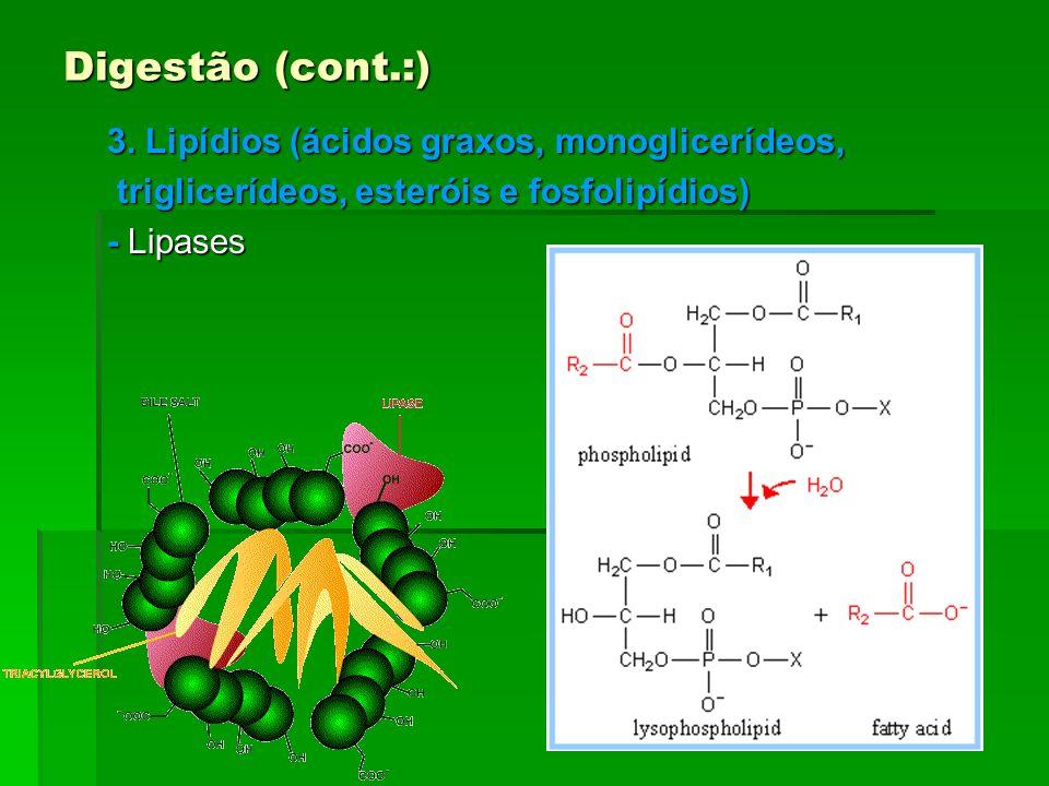 Digestão (cont.:) 3. Lipídios (ácidos graxos, monoglicerídeos, triglicerídeos, esteróis e fosfolipídios) triglicerídeos, esteróis e fosfolipídios) - L