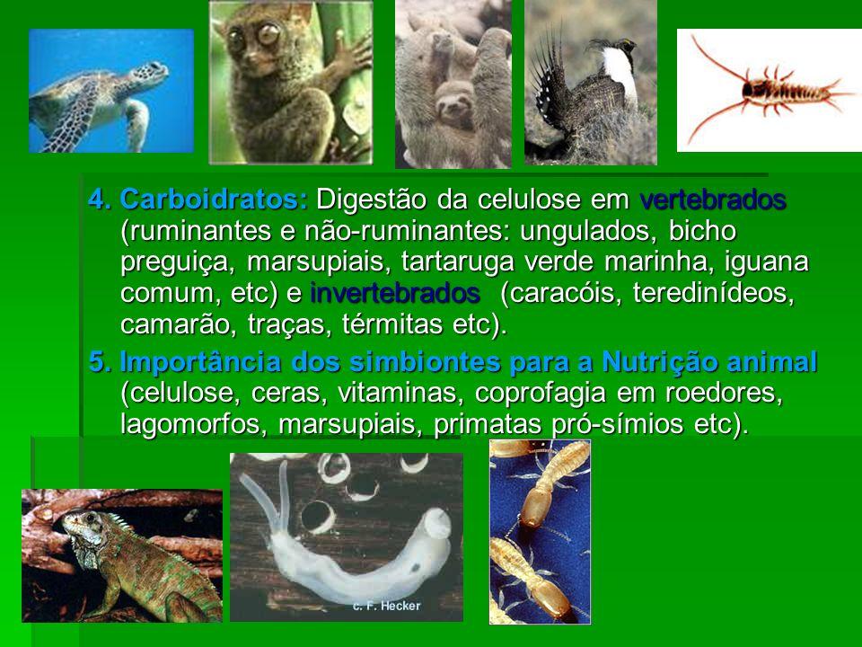 4. Carboidratos: Digestão da celulose em vertebrados (ruminantes e não-ruminantes: ungulados, bicho preguiça, marsupiais, tartaruga verde marinha, igu