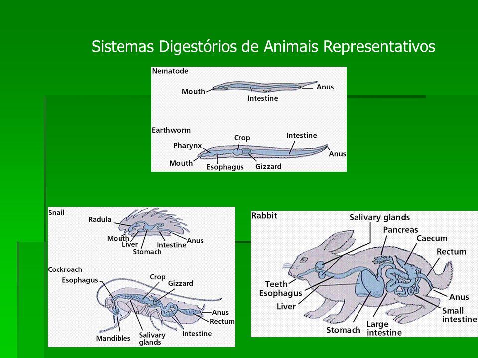 Sistemas Digestórios de Animais Representativos