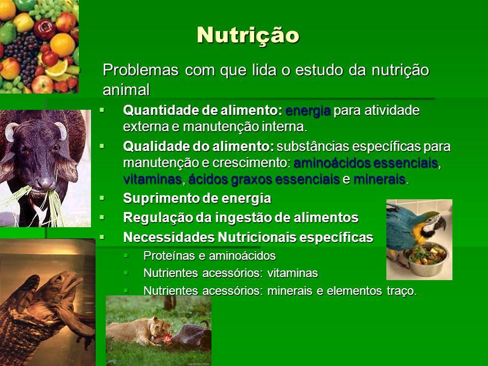 Nutrição Problemas com que lida o estudo da nutrição animal Problemas com que lida o estudo da nutrição animal Quantidade de alimento: energia para at