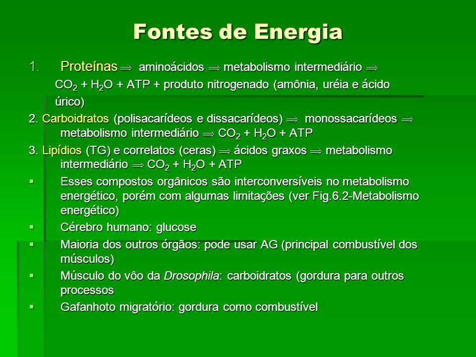 Fontes de Energia 1.Proteínas amino á cidos metabolismo intermedi á rio 1.Proteínas amino á cidos metabolismo intermedi á rio CO 2 + H 2 O + ATP + pro