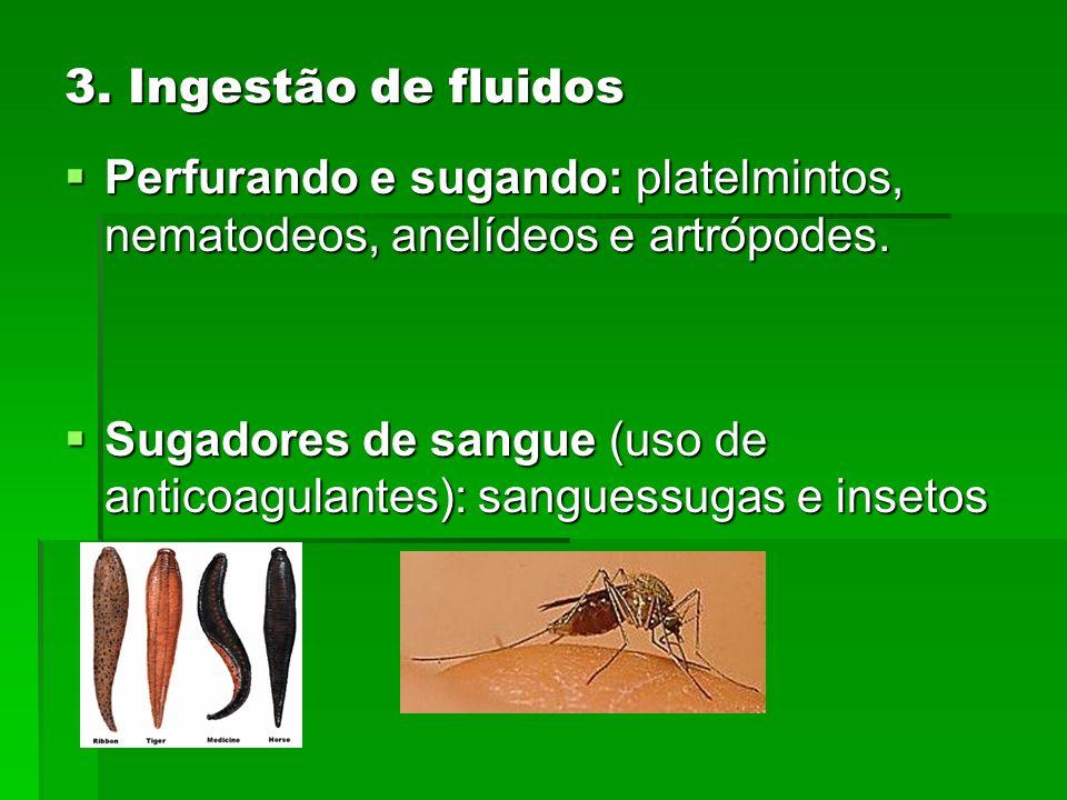3. Ingestão de fluidos Perfurando e sugando: platelmintos, nematodeos, anelídeos e artrópodes. Perfurando e sugando: platelmintos, nematodeos, anelíde