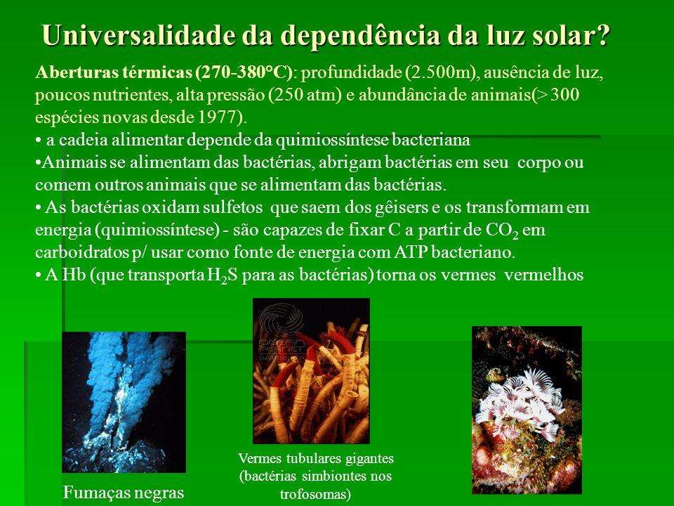 Universalidade da dependência da luz solar? Fumaças negras Vermes tubulares gigantes (bactérias simbiontes nos trofosomas) Aberturas térmicas (270-380