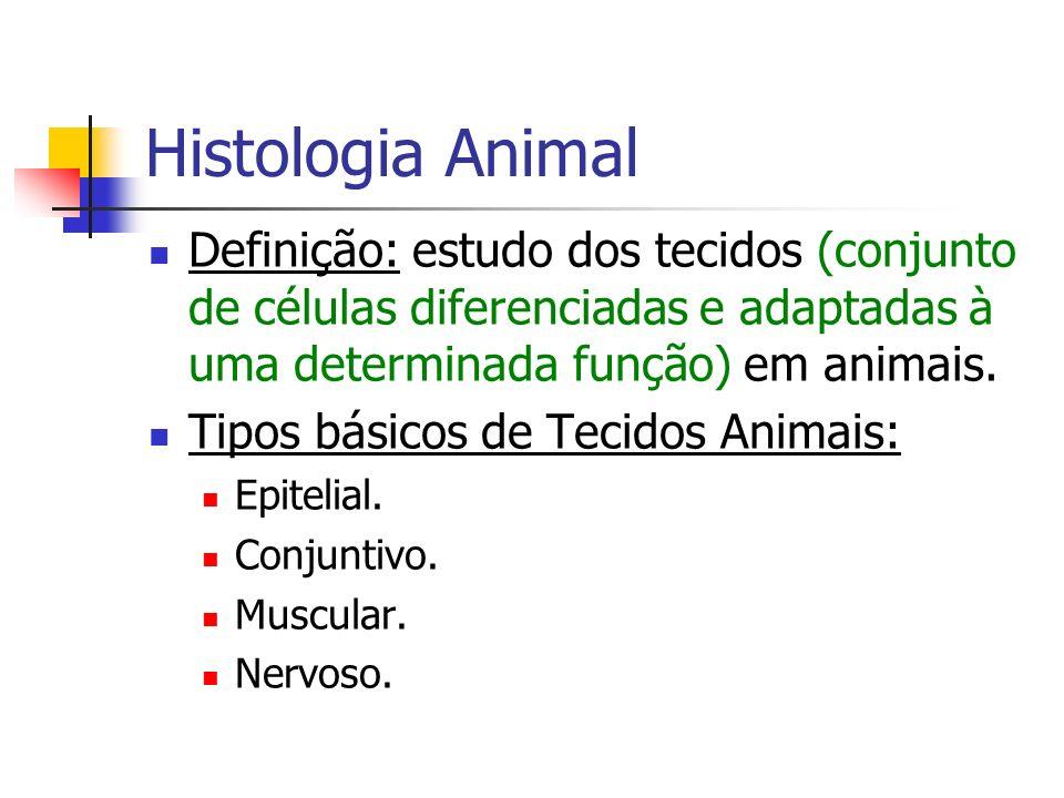 Histologia Animal Tecido Epitelial: Formado por células poliédricas justapostas com matriz intercelular reduzida ou ausente.