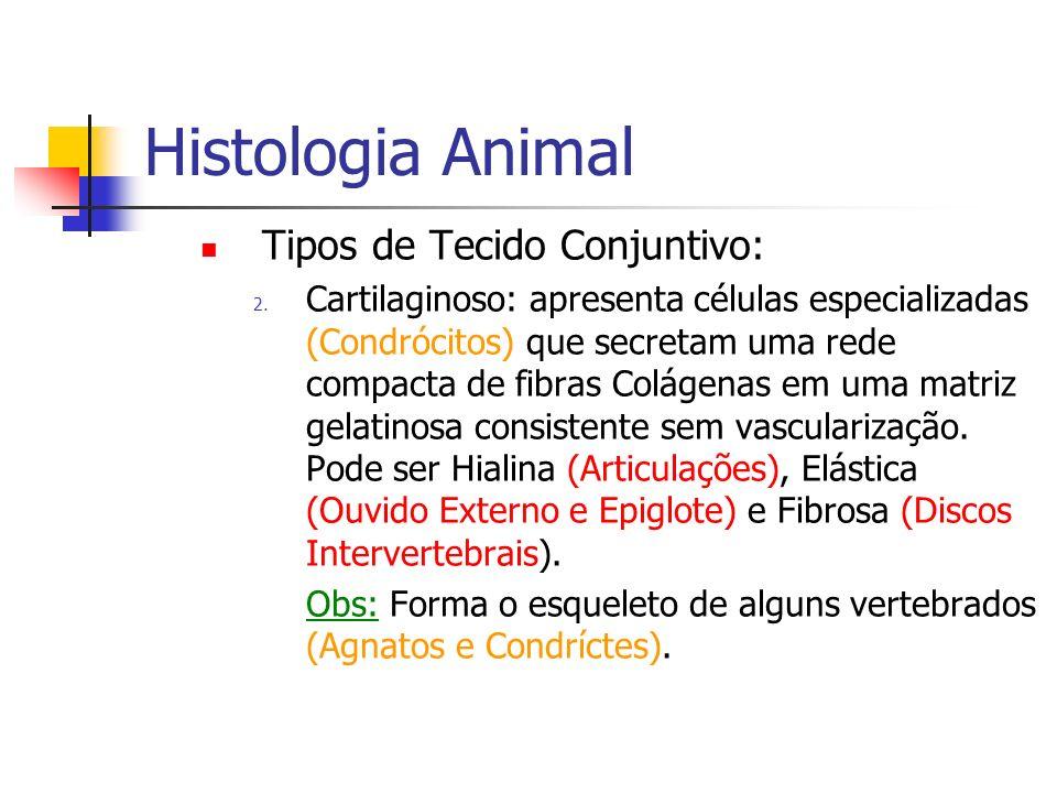 Histologia Animal Tipos de Tecido Conjuntivo: 2. Cartilaginoso: apresenta células especializadas (Condrócitos) que secretam uma rede compacta de fibra