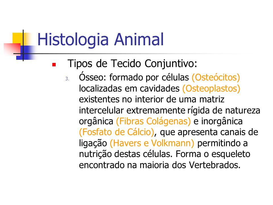 Histologia Animal Tipos de Tecido Conjuntivo: 3. Ósseo: formado por células (Osteócitos) localizadas em cavidades (Osteoplastos) existentes no interio
