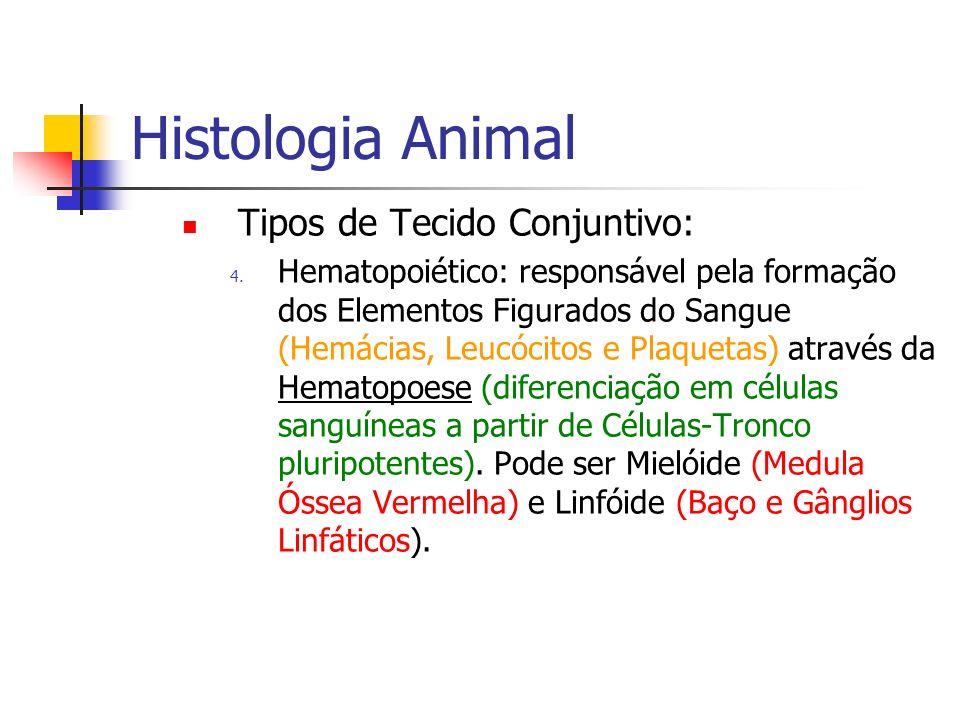 Histologia Animal Tipos de Tecido Conjuntivo: 4. Hematopoiético: responsável pela formação dos Elementos Figurados do Sangue (Hemácias, Leucócitos e P