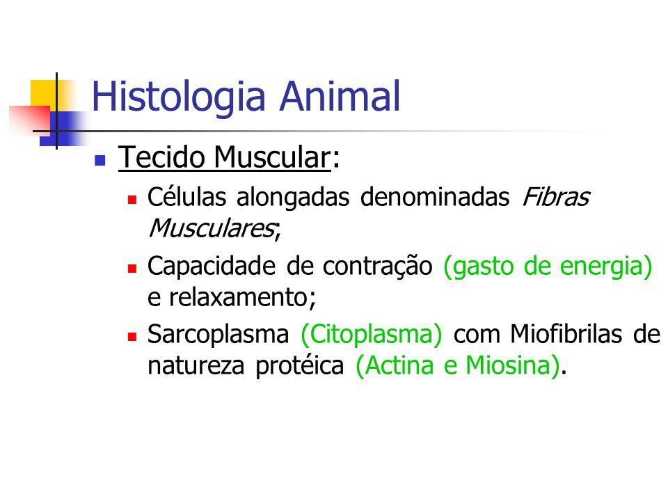 Histologia Animal Tecido Muscular: Células alongadas denominadas Fibras Musculares; Capacidade de contração (gasto de energia) e relaxamento; Sarcopla