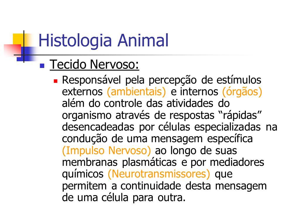 Histologia Animal Tecido Nervoso: Responsável pela percepção de estímulos externos (ambientais) e internos (órgãos) além do controle das atividades do