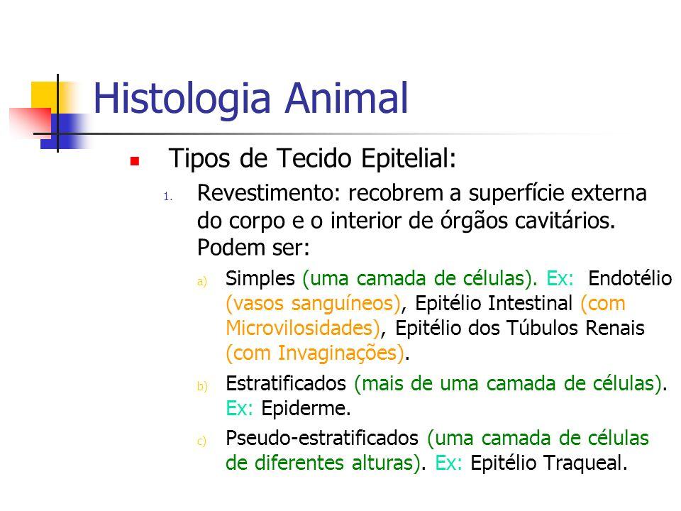 Histologia Animal Tipos de Tecido Epitelial: 1. Revestimento: recobrem a superfície externa do corpo e o interior de órgãos cavitários. Podem ser: a)