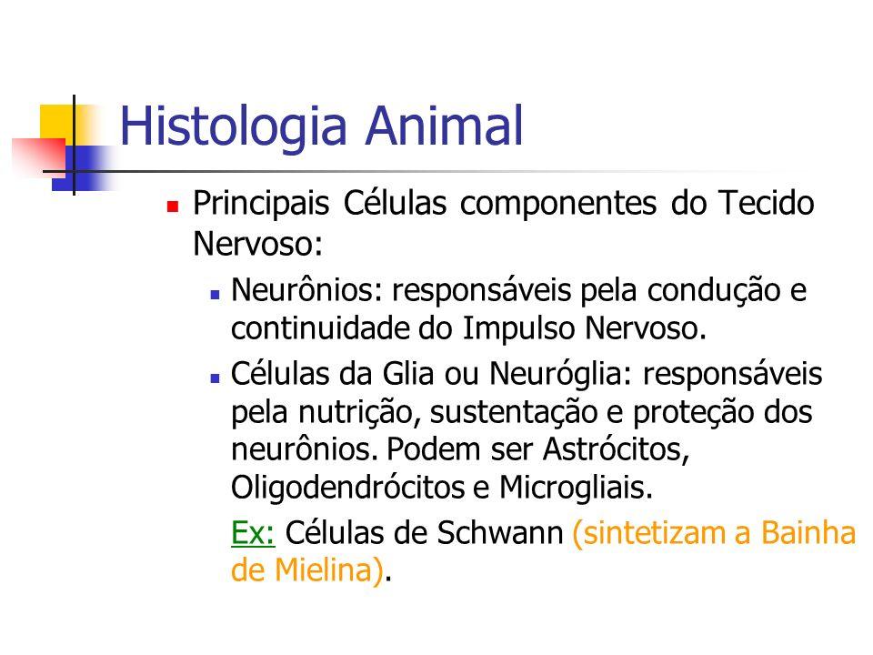 Histologia Animal Principais Células componentes do Tecido Nervoso: Neurônios: responsáveis pela condução e continuidade do Impulso Nervoso. Células d