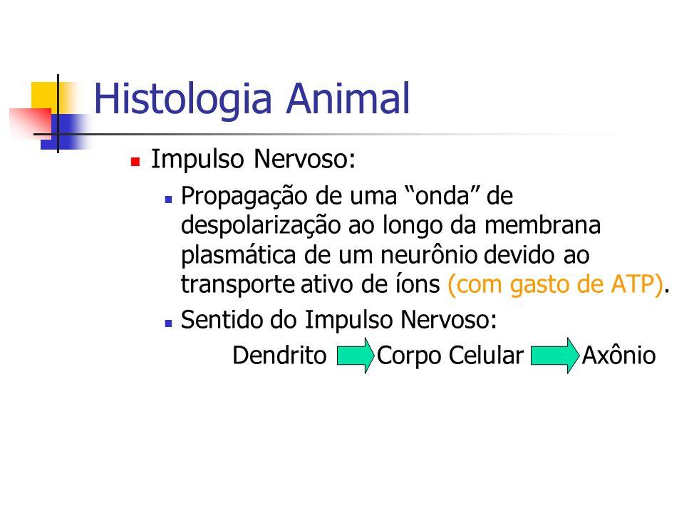 Histologia Animal Impulso Nervoso: Propagação de uma onda de despolarização ao longo da membrana plasmática de um neurônio devido ao transporte ativo