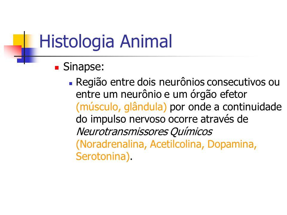 Histologia Animal Sinapse: Região entre dois neurônios consecutivos ou entre um neurônio e um órgão efetor (músculo, glândula) por onde a continuidade