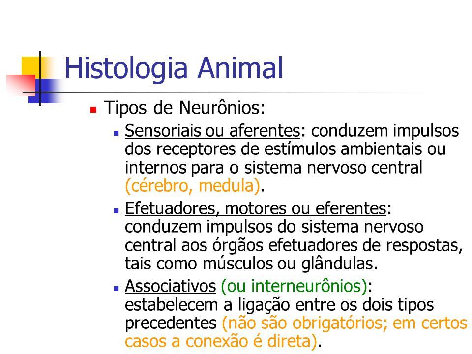 Histologia Animal Tipos de Neurônios: Sensoriais ou aferentes: conduzem impulsos dos receptores de estímulos ambientais ou internos para o sistema ner