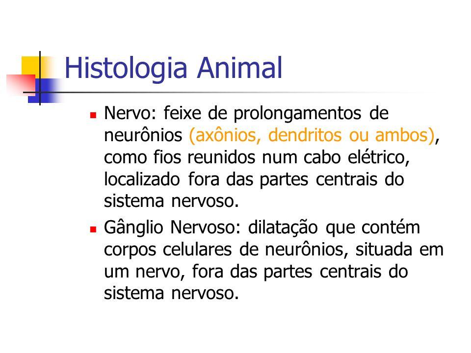Histologia Animal Nervo: feixe de prolongamentos de neurônios (axônios, dendritos ou ambos), como fios reunidos num cabo elétrico, localizado fora das