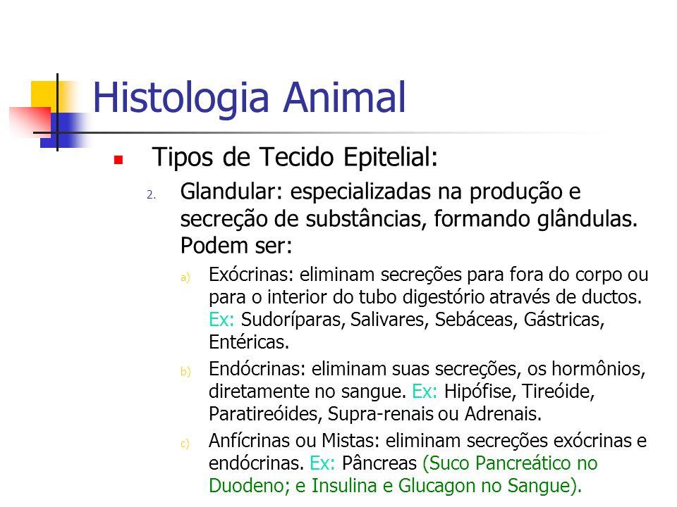 Histologia Animal Tipos de Tecido Epitelial: 2. Glandular: especializadas na produção e secreção de substâncias, formando glândulas. Podem ser: a) Exó