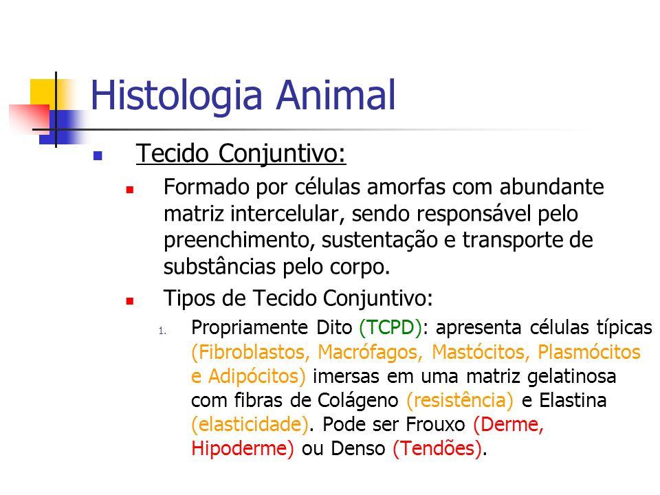 Histologia Animal Tecido Conjuntivo: Formado por células amorfas com abundante matriz intercelular, sendo responsável pelo preenchimento, sustentação
