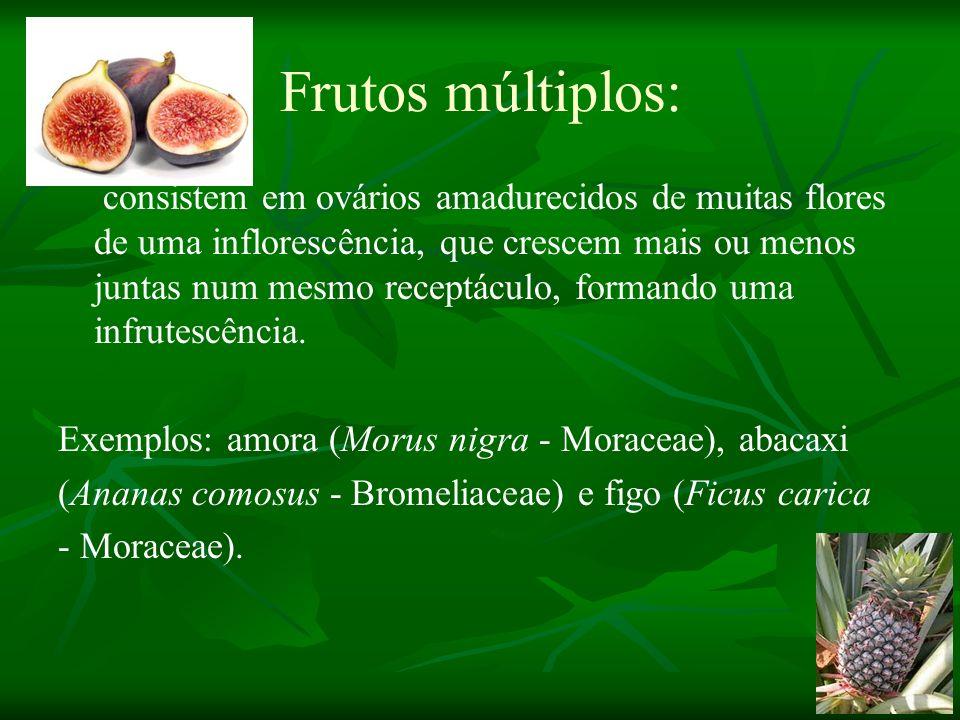 Frutos múltiplos: consistem em ovários amadurecidos de muitas flores de uma inflorescência, que crescem mais ou menos juntas num mesmo receptáculo, fo
