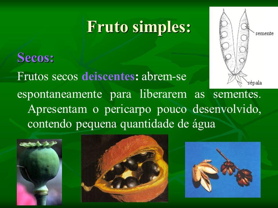 Fruto simples: Secos: Frutos secos deiscentes: abrem-se espontaneamente para liberarem as sementes. Apresentam o pericarpo pouco desenvolvido, contend